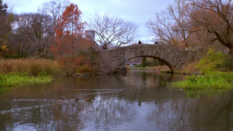 Panning shot of ducks swiimming towards arched birdge in central park Footage