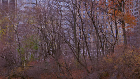 Panning shot of water and trees to skyscrapers in New York City Footage