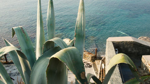 cactus on the beach of Nervi, Genoa in spring, panoramic view of the Ligurian GIF