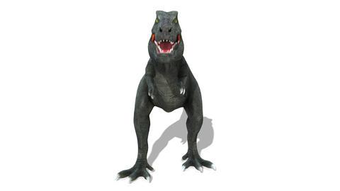 Dinosaur T-REX(Tyrannosaurus) Animation