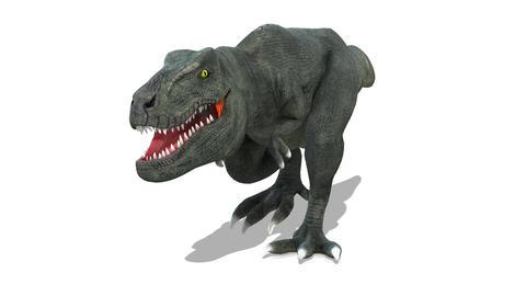 Dinosaur T-REX(Tyrannosaurus), Stock Animation