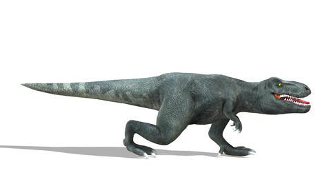 Dinosaur T-REX(Tyrannosaurus) Stock Video Footage
