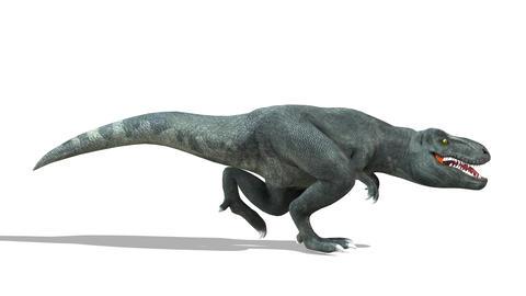 恐竜 T-REX(ティラノザウルス) CG動画素材