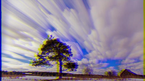 Glitch effect. A tree grows in the field. Blurry. Time Lapse Footage