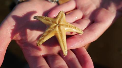 Alive starfish closeup view Footage