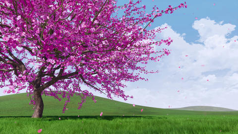 Lush sakura cherry blossoms with falling petals GIF