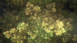 Abstract Fractal Leaf Patterns Slowly Morphing and... Stock Video Footage