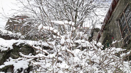 branches of trees covered with snow after snowfall, slider shot Footage