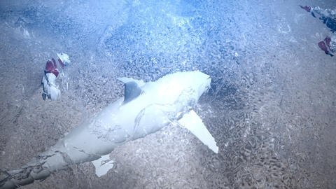 Shark view from above water, Stock Animation