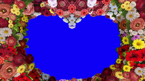 Animation of swirling flowers forming the silhouette of a heart on a blue background. Template for Animation