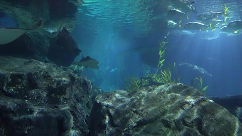 stingrays and sharks swim in the large aquarium of the aquarium. Marine life Live Action