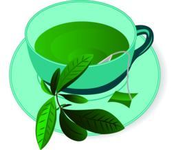 A cup ofGreen tea vector illustration Vector