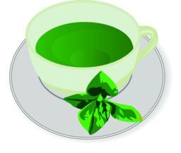 Peppermint tea Vector