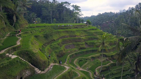 Aerial view above of Bali landscapes with terraces rice fields Footage