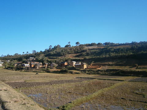 Malagasy Village and Paddy Fields, Madagascar Photo