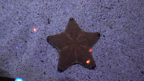 Starfish lying on the sandy bottom. Marine life close-up Live Action