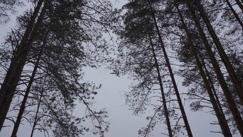 Trees rotating inside the winter forest Archivo
