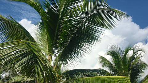 Tropical tourism inspiration background cloudy sky with moving high palmtree Archivo