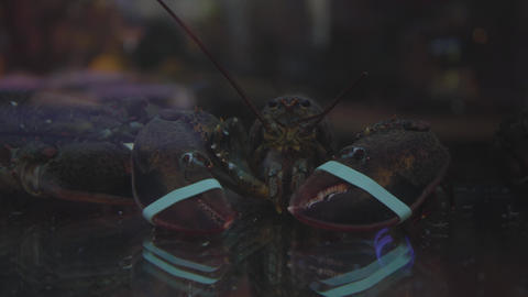 Close-up of a live lobster with tied claws. Shooting through the glass Live Action