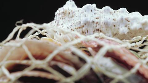 Set of seashells bulk Footage