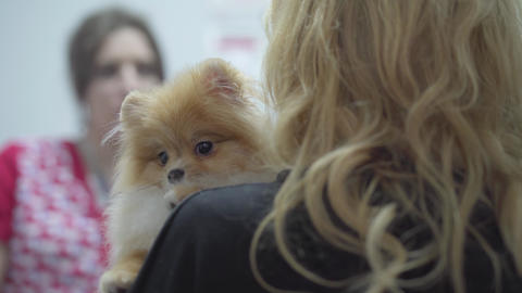 Blond woman holding small pomeranian spitz who afraids to get vaccination in the Live Action