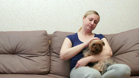 A woman sits on a couch and strokes a soothing Yorkshire terrier Live Action