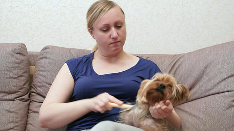 The woman on the couch holds the Yorkshire terrier in her arms. She is combing Footage