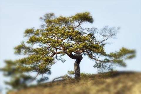 Tree with radiating power Fotografía