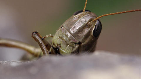 Macro shot of a grasshopper's head Footage