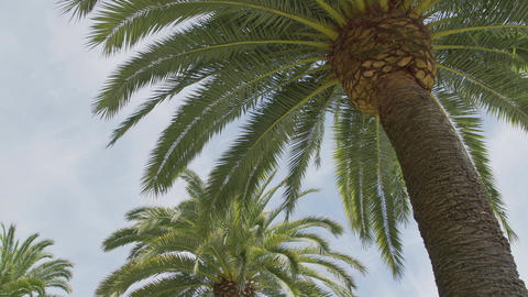 Low angle view of palm fronds Footage