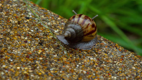 Garden snail crawling on pavement Footage