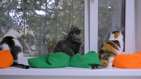 Group of cats sitting on windowsill Live Action