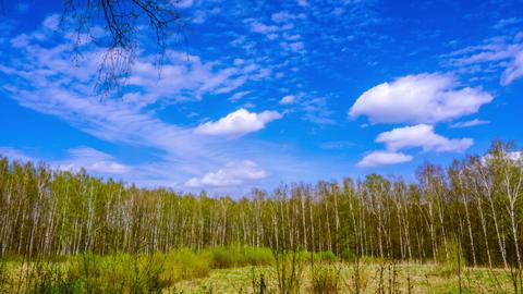 Forest in early spring. time lapse Acción en vivo