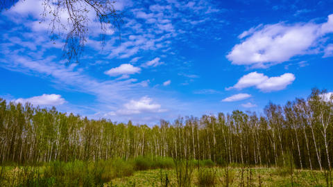 Forest in early spring. time lapse Live Action