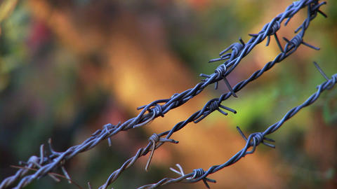 Close up view of barbed wire fence in fall Footage