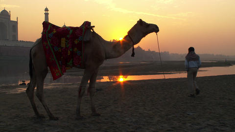 Taj Mahal, man, camel at sunset Footage