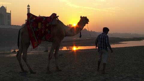 Man guides a camel with the sunset and Taj Mahal in the background Footage