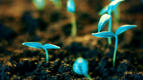 Blue plants growing, futuristic planet, new life germination, growth modern Footage