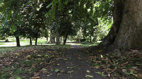Royal botanical garden sri lanka Footage