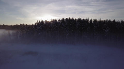 Setting sun blinking behind treetops at foggy winter landscape Footage
