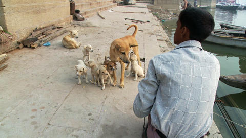Young man with dog and puppies Live Action