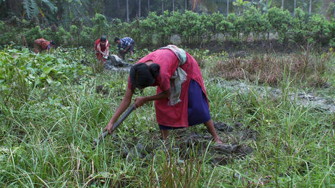 Indian woman tilling a field by hand Footage