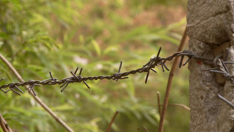 Barbed wire fence by green grass Footage