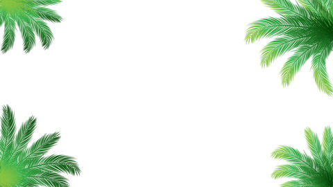 Coconut leaves with empty for decoration background video.Summer graphic video concept Animation