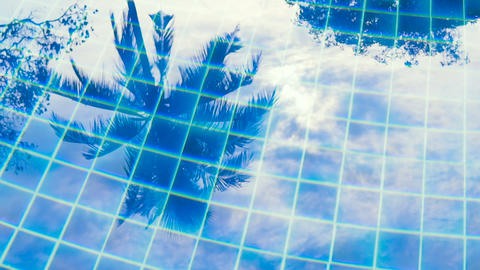 Tropical palms reflecting in blue clear water Archivo