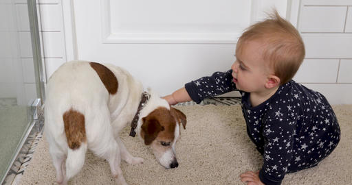 Little baby and dog Jack Russell Terrier on a white carpet Live Action