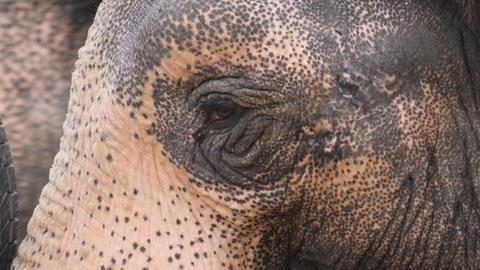 elephant eye close up Live Action