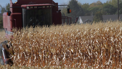 A combine cutting a corn field and then it stops in the field Footage