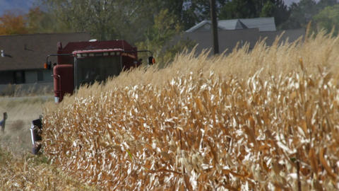 A combine cutting a corn field coming toward the camera Footage
