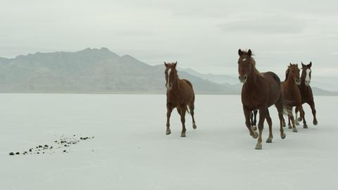 Horses running across salt flats Live Action